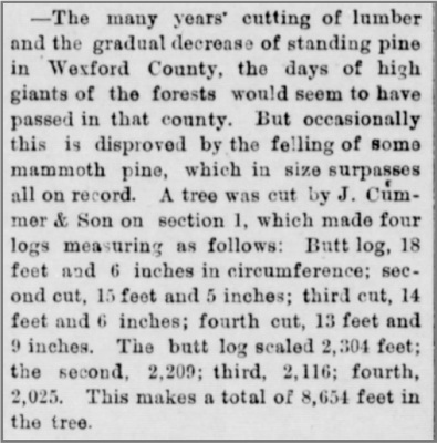 the-true-northern-paw-paw-1-30-1889-giant-tree